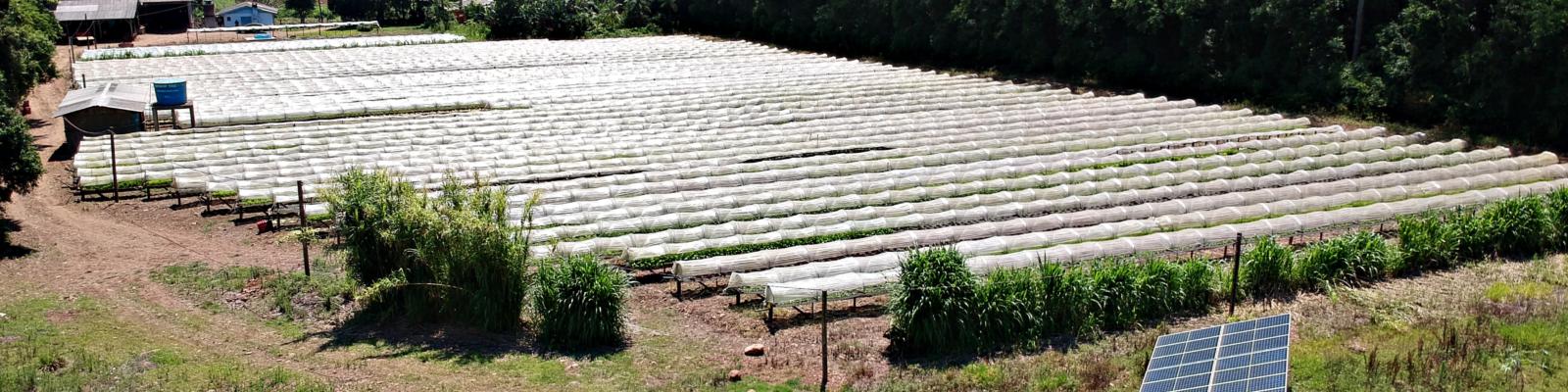 Energia solar na agricultura - Elysia sistema fotovoltaico Rio Grande do Sul